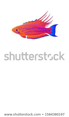 魚 白 例外的な 海洋 文字 サンプル ストックフォト © robuart