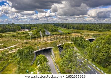 Snelweg landschap Nederland weg snelweg brug Stockfoto © prill