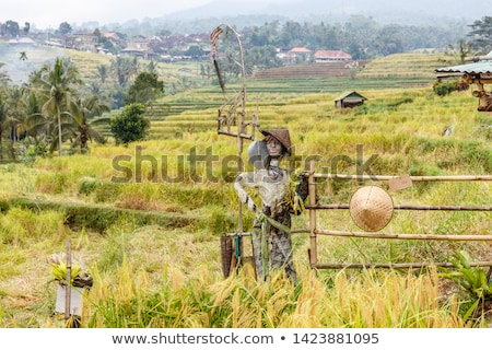 scarecrow at rice fields of jatiluwih in southeast bali stock photo © boggy