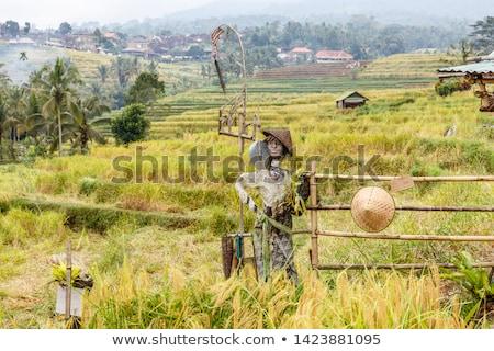 かかし コメ フィールド 南東 バリ インドネシア ストックフォト © boggy