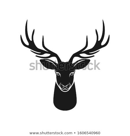 Ciervos negro monocromo icono aislado reno Foto stock © robuart
