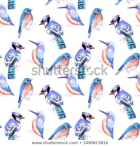 Keleti madár végtelenített vízfesték madarak festmény Stock fotó © shawlinmohd