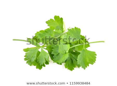 Coriander (Coriandrum sativum) Stock photo © rbiedermann