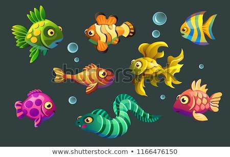 ウナギ · 魚 · 隠蔽 · 水 · 海 · 美 - ストックフォト © Laracca