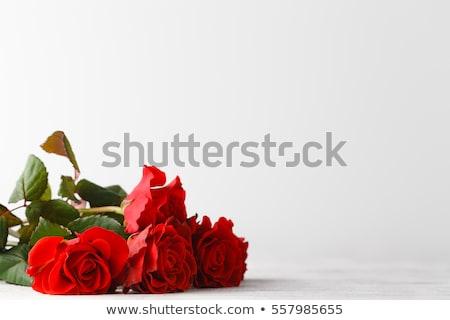 Schönen Herz rote Rose Blütenblätter leeres Papier weiß Stock foto © posterize