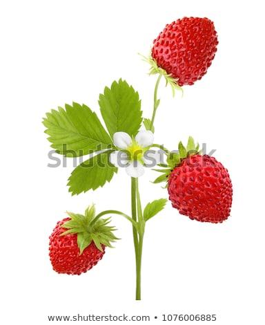 çilek · bahçe · bahar · meyve · arka · plan · yeşil - stok fotoğraf © magann