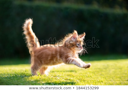 красный кошки вектора Cartoon свет животного Сток-фото © Sylverarts