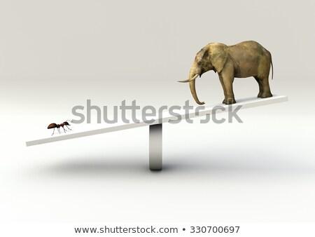Formiga elefante sorrir feliz natureza Foto stock © dagadu