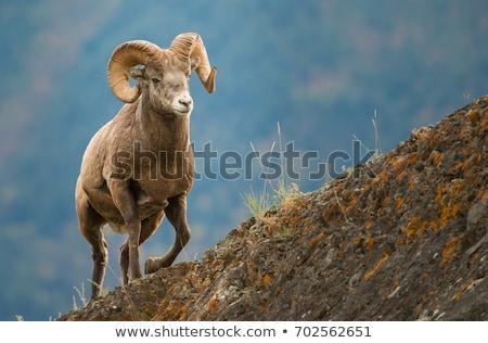 羊 ショット 山 風景 木 ストックフォト © macropixel
