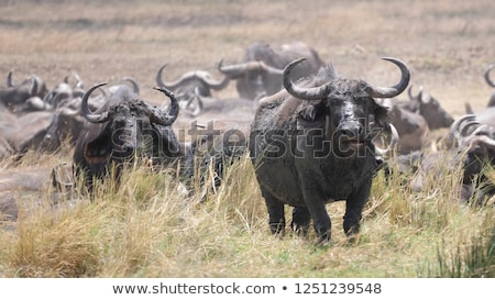 campo · grama · floresta · preto · vida · animal - foto stock © michaklootwijk