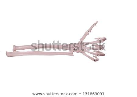 Count 1 - Hand And Arm Of Bones Stock fotó © pterwort