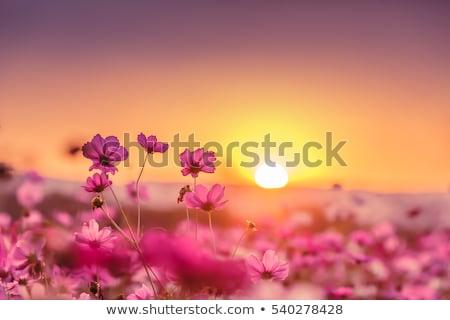диких · цветов · луговой · красивой · цвета · весны - Сток-фото © anna_om