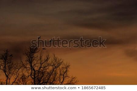 Desfolhada árvores noite céu dois carvalho Foto stock © elenaphoto