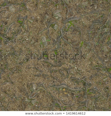 Forest Soil. Seamless Texture. Stock photo © tashatuvango
