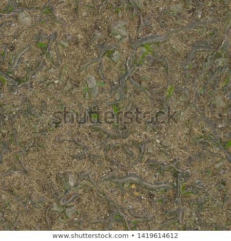 forest soil seamless texture stock photo © tashatuvango