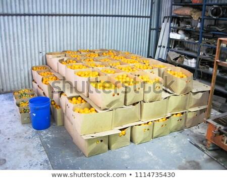 gyűjtemény · lédús · izolált · fehér · étel · narancs - stock fotó © mikko