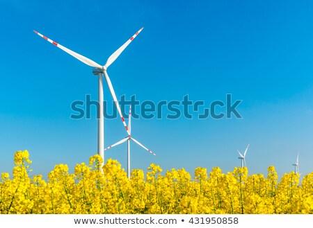 Mező szél malom farm tájkép nemi erőszak Stock fotó © fotoaloja