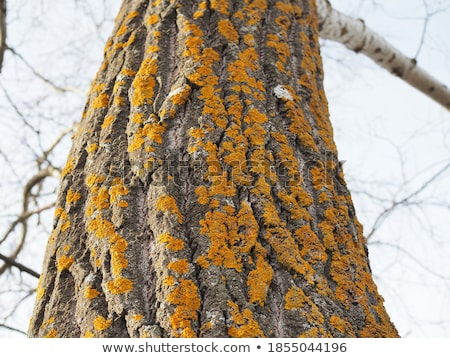 Pomarańczowy grzyb rozwój drzewo lesie charakter Zdjęcia stock © brm1949