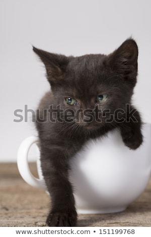 Gattino tazza da tè bianco baby cat blu Foto d'archivio © cynoclub