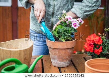 idős · nő · virágok · jobb · növekedés · tavasz · munka - stock fotó © artush