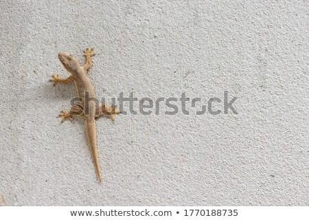Branco concreto parede lagarto um textura Foto stock © smuay