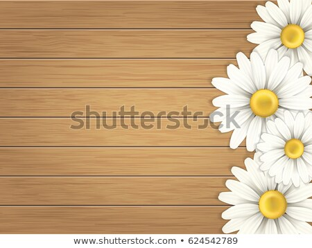 daisy on vintage wood planks stock photo © mady70