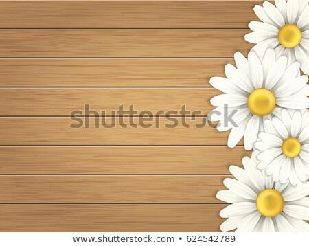 Daisy · grunge · rose · fleur · tête ·  tige - photo stock © mady70