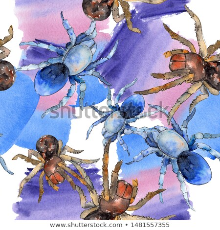 Tarantula Drawing Stock photo © cteconsulting