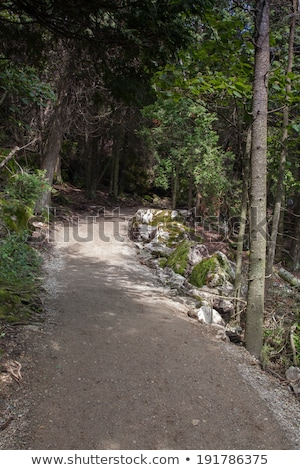 trail passing through a forest tobermory ontario canada stock photo © bmonteny