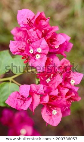 紙 花 ヴィンテージ 庭園 自然 公園 ストックフォト © sweetcrisis