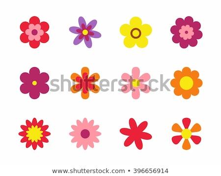 Conjunto flor do vetor flores ícones projeto Foto stock © elenapro