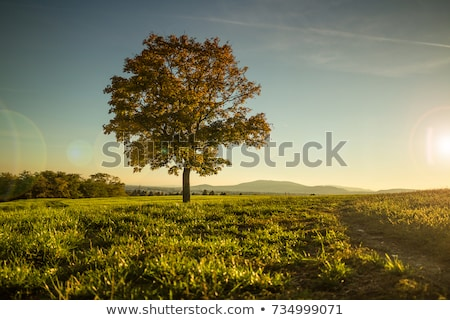 beautiful lonely tree on sunset stock photo © maxpro