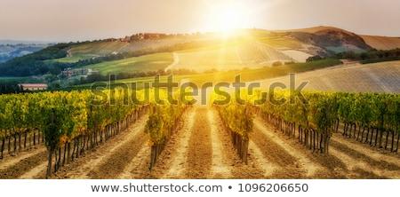 napsütés · vidék · tájkép · napos · időjárás · égbolt - stock fotó © Sportactive