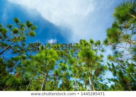 Landscape with pine trees in  Georgia Stock photo © master1305