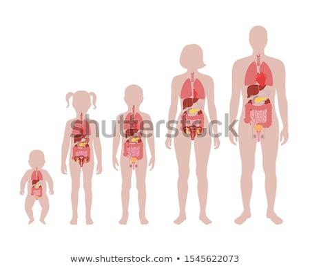 humanismo · intestinos · anatomia · silhueta · abstrato · luz · azul - foto stock © bluering