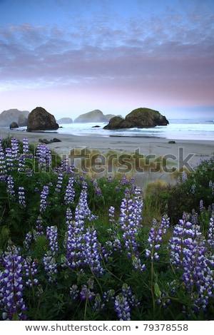 kuru · ot · yığını · kaya · top · plaj · gün · batımı · iğneler - stok fotoğraf © iriana88w