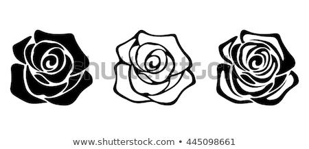 Sziluett rózsa virágok izolált fehér virág Stock fotó © Genestro