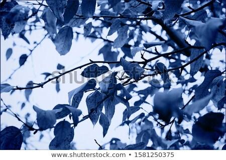Blauw · fractal · ontwerp · groot · textuur - stockfoto © ongap