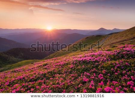 Verão paisagem flores montanhas luxuriante Foto stock © Kotenko