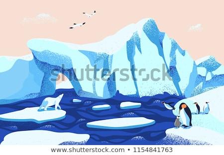 Vetor estilo ilustração pinguim isolado branco Foto stock © curiosity