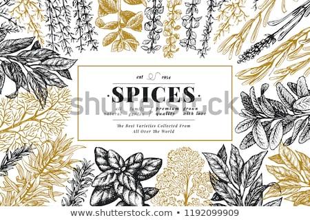 Gasztronómiai gyógynövények különböző fehér zöld kosár Stock fotó © joker