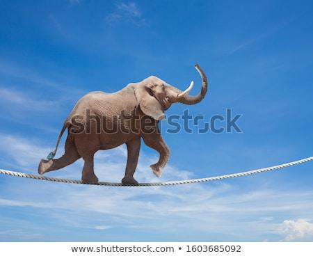Acrobata corda giovani imprenditore piedi argento Foto d'archivio © tiero