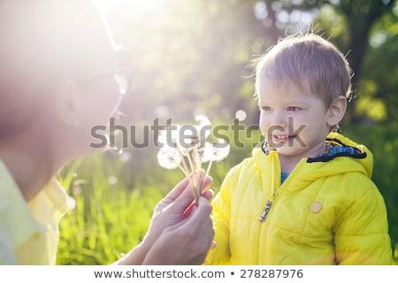 pitypang · csoport · csoportok · pitypangok · fű · természet - stock fotó © 5xinc