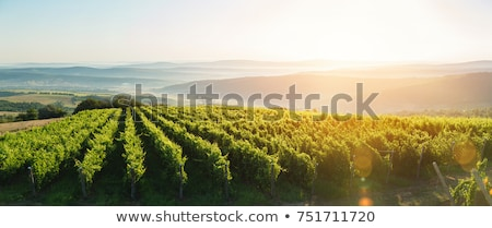 Europe Vineyard Rows Stock photo © saje