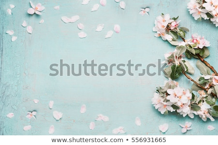 Stok fotoğraf: Spring Top View Background
