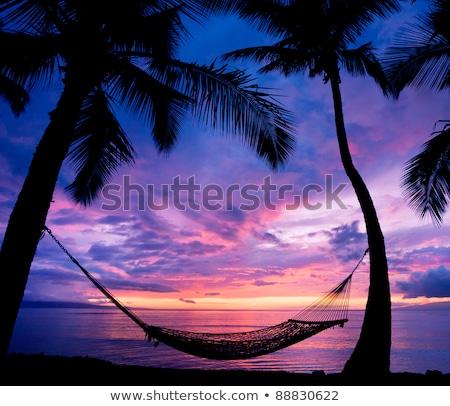 hamak · tropikalnej · plaży · piaszczysty · dwa · okulary · whisky - zdjęcia stock © tracer