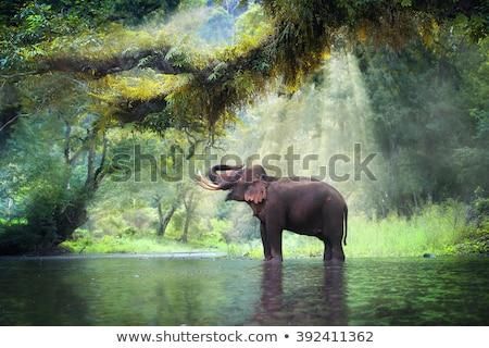 Elefántok dzsungel jelenet illusztráció háttér zöld Stock fotó © bluering