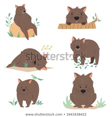 Ingesteld wombat karakter illustratie ontwerp achtergrond Stockfoto © colematt