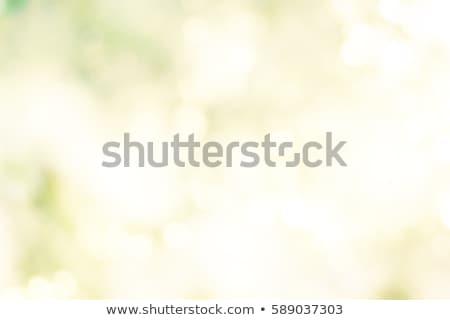 Groene voorjaar zonneschijn licht wolken achtergrond Stockfoto © romvo