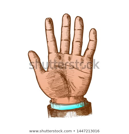 Color Male Hand Make Gesture Five Fingers Up Vector Stock photo © pikepicture